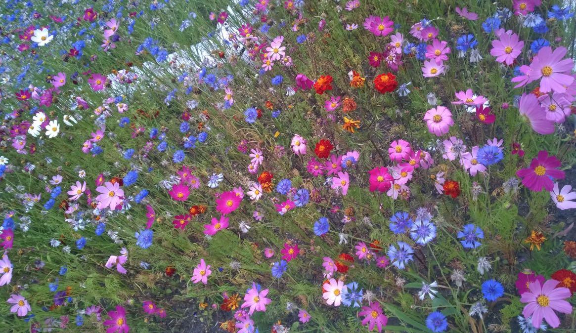 Flora am Baikalsee