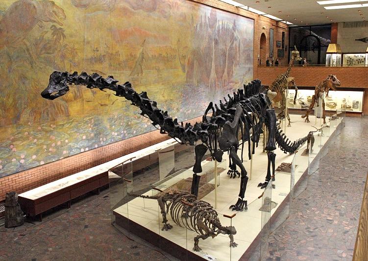 Musée de Paléontologie Orlov